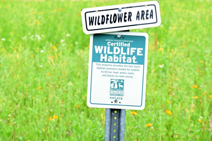 Sign denoting wildflower area