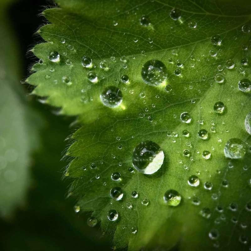 fotografia-ploaie-sfaturi-echipament-foto-photosetup-5