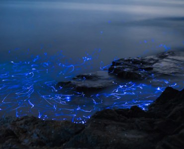 bioluminescence,places to visit in June