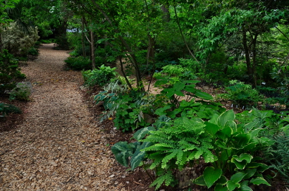 Woodland Garden Paths near the Water Oak Garden