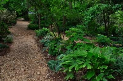 Woodland Garden Paths near the Water Oak Garden