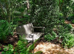 Solitude in JLBG's Woodland Garden July 2014
