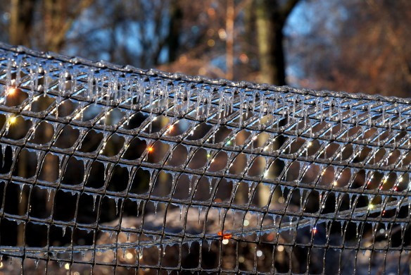 Deer fence in ice