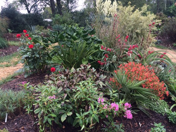 picture from the garden - Dahlia, Gladiolus, Silene