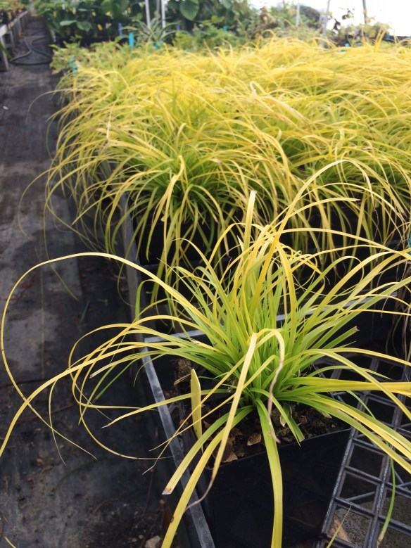 picture of Carex Everillo in our sales house