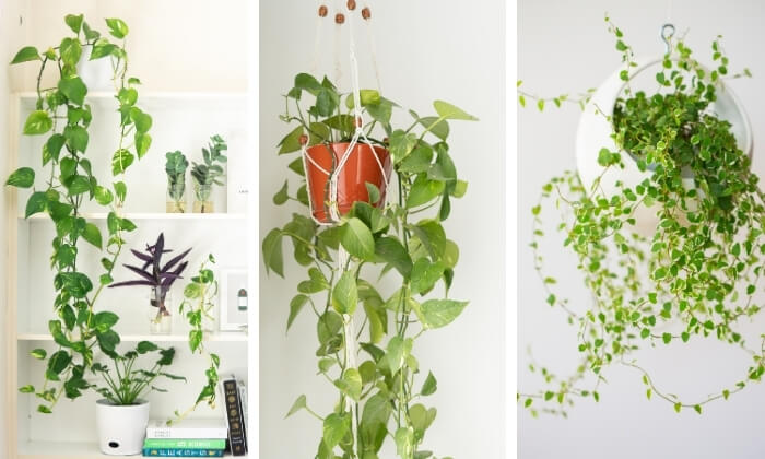 plantas pendentes na sala