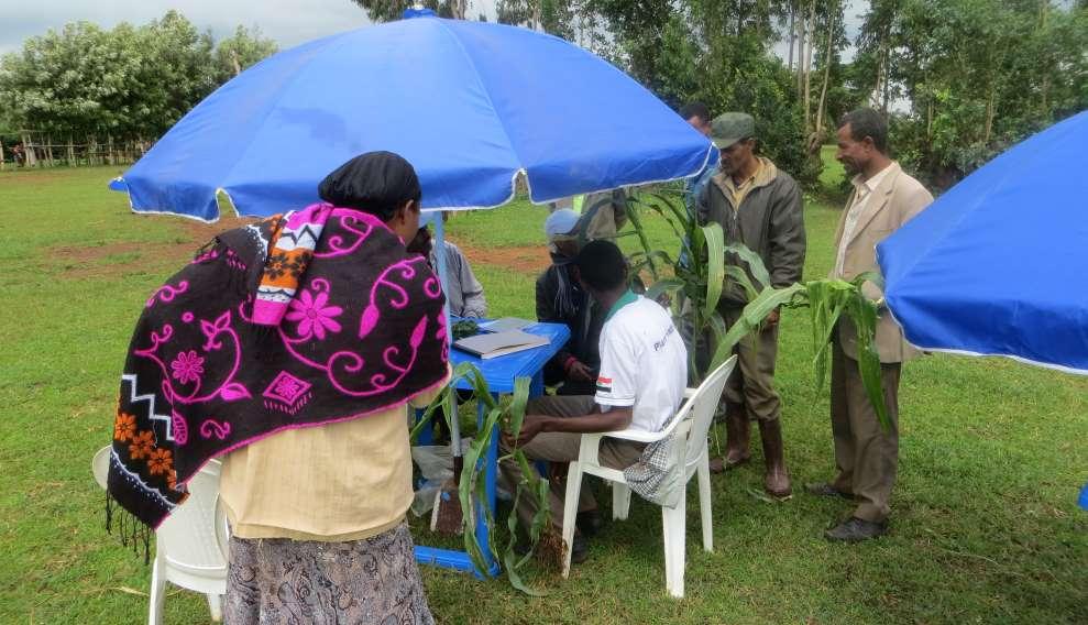Village-based plant clinics benefit Ethiopian farmers