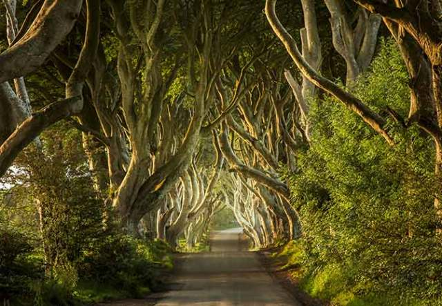 Game of Thrones® Tours - Dark Hedges