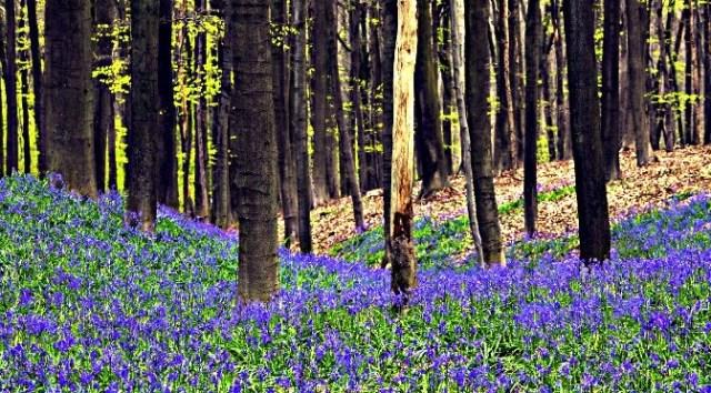 Green Spaces in Belgium: Woodland Belgium
