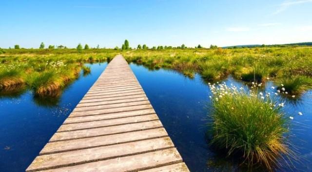 Green Spaces in Belgium: Highs Fens Eifel Nature Park