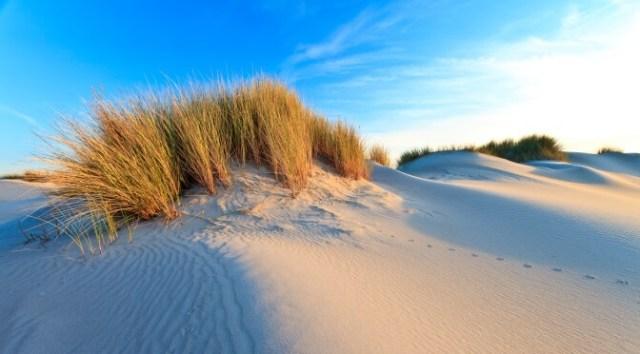 National Parks of The Netherlands: Drunen National Park, Dunes of Loon