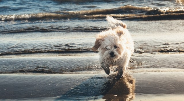 Beach holidays for dogs