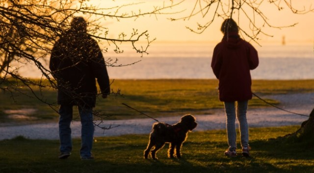 Walking holidays with dogs