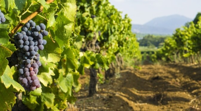Summer Road Trip: The Wine Capitals of France