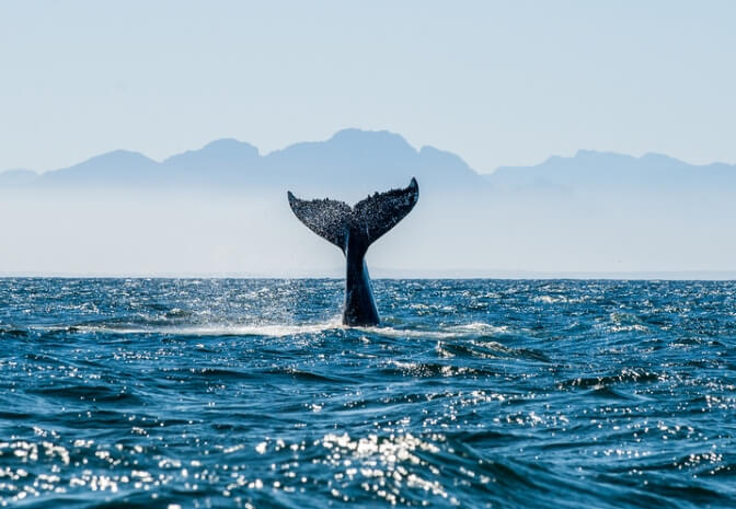 The best places to go whale watching in Scotland