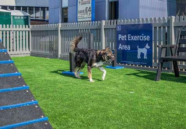 Dog Walks in Dover - Port