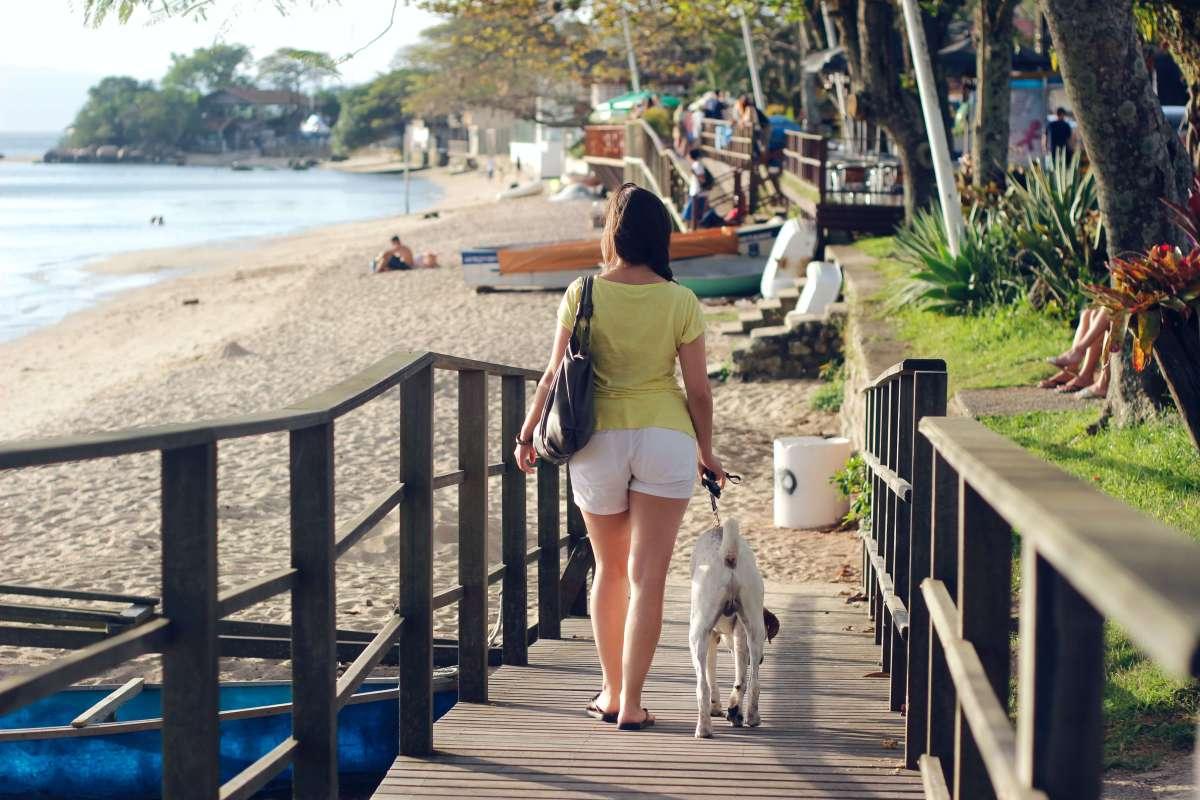 cuidados com cachorro na praia