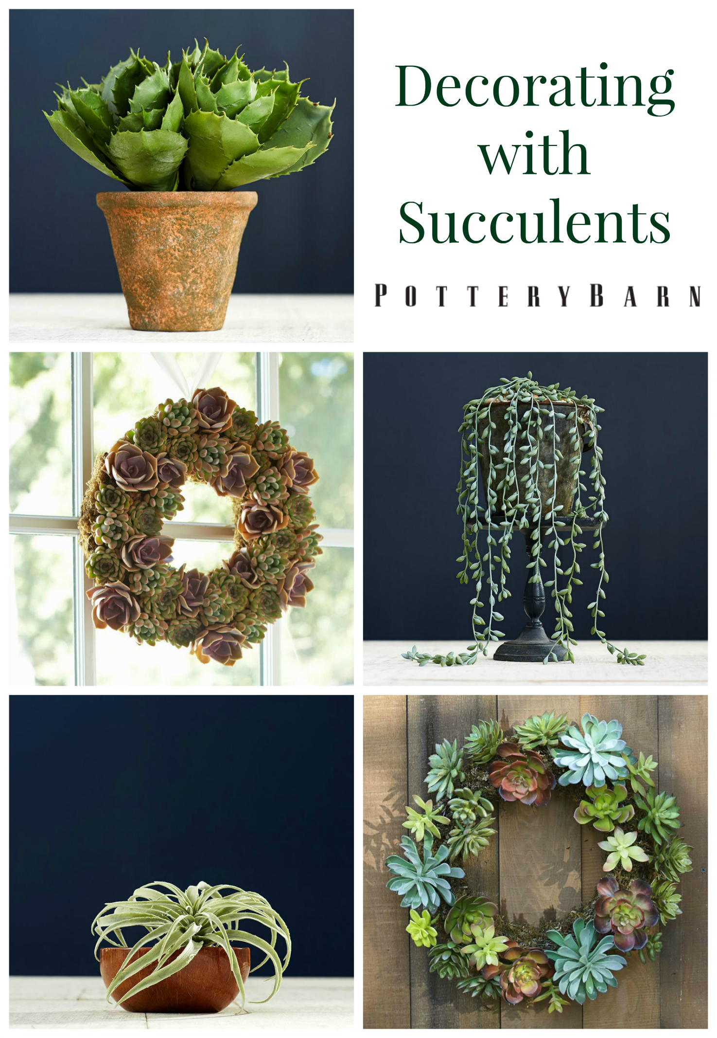 Decorating With Succulents Pottery Barn