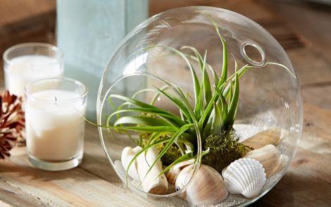 live-tabletop-airplant-garden-z