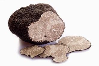 Truffes noires périgord Pourdebon