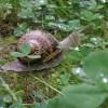 Ferme hélicicole de l'Avesnois - L'escargot de ch'Nord