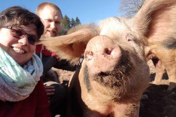 la ferme de gremi élevage de porcs de bayeux