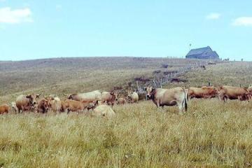 Domaine des vache de l'Aubrac
