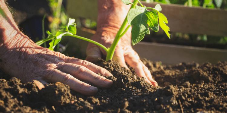 faire pousser des déchets alimentaires