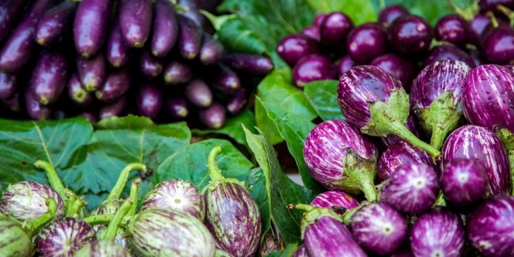 aubergine : tout savoir sur ce légume d'été