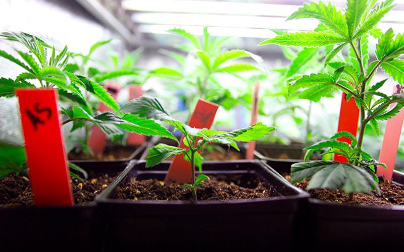 Meios de Cultivo Indoor