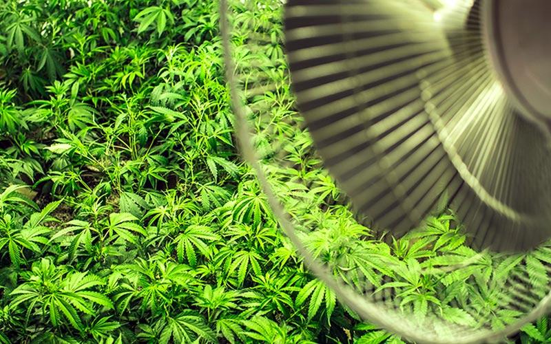 Ventilação para Cultivo Indoor