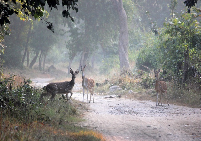 Rajaji National Park Haridwar