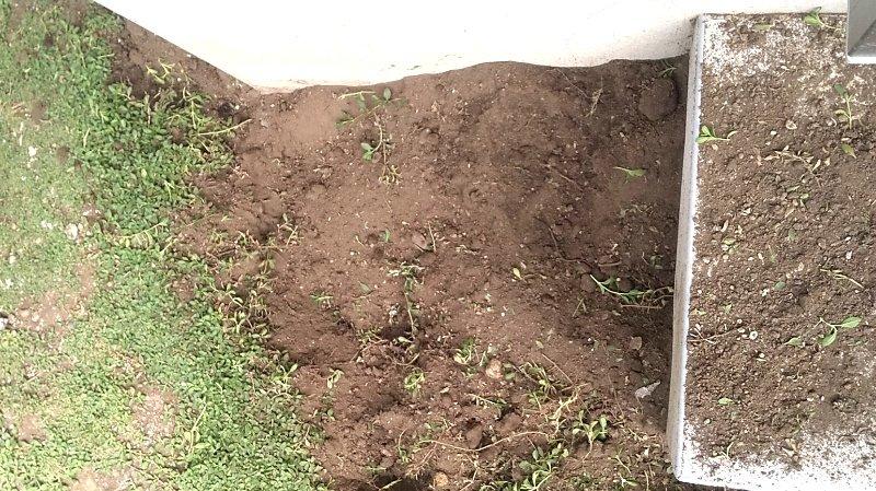 クラピアを掘り返した剥き出しの土の写真