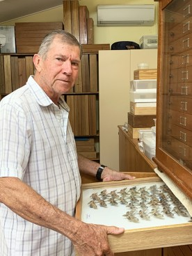 David Lane pulling out a cabinet drawer containing a display of moth specimens.