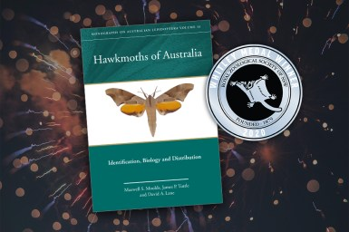 The cover of the book Hawkmoths of Australia, with the Whitley Medal award logo, upon a background illustration of fireworks.