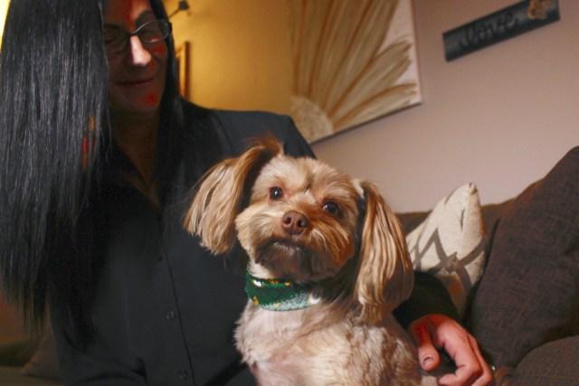 CBD Benefits to Pets Debated