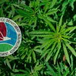 DEA Releases Draft Rules Related to Cannabis Medical Research
