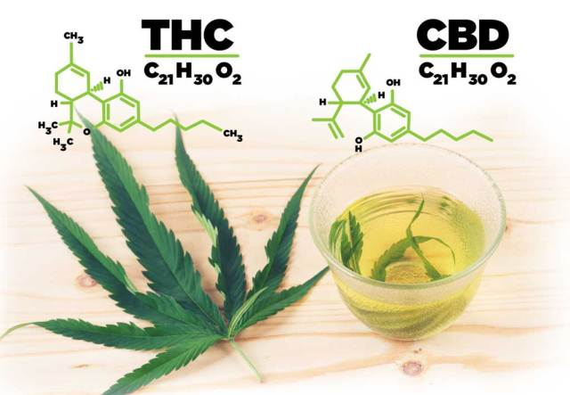 LISTED HERE IS THE ESSENTIAL DIFFERENCE BETWEEN CBD AND THC