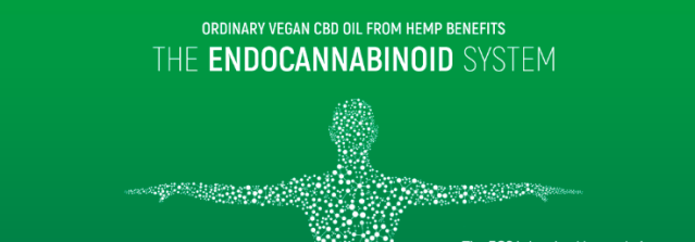 How To Use CBD Oil for Pain: What is the Best CBD Oil as an Alternative to Prescription Drugs?