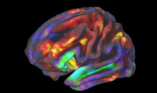 CBD does not appear to alter functional activity in the brain's reward circuit