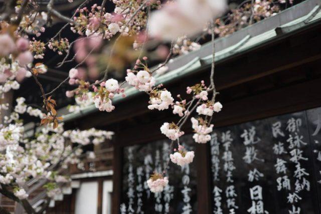 日本語 母国語 英語 習得 子供 土台