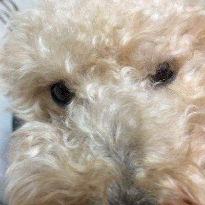 うちにやってきた捨て犬の物語~ROY STORY