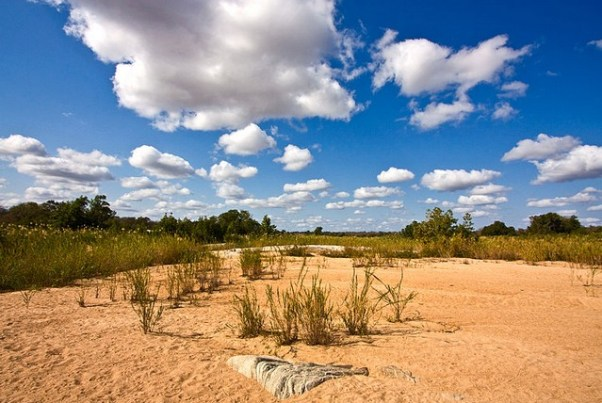 Kruger National Park 3