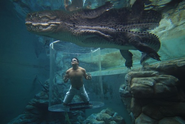 Holidays: Crocosaurus Cove