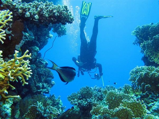 Red sea resort from Purple Travel