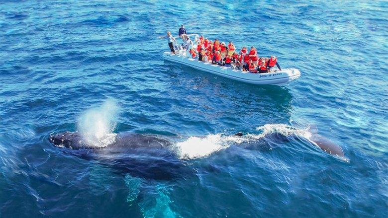 whale season Puerto Vallarta