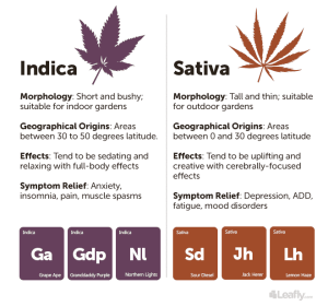 Indica vs Sativa Leafly