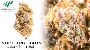 Northern Lights marijuana strains