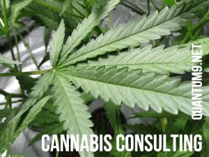 Quantum 9 Cannabis Consultant Massachusetts