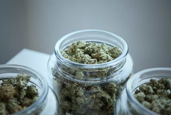 medical marijuana for MS